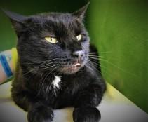olivecat