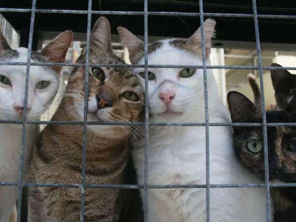 shelter-cat2.jpg